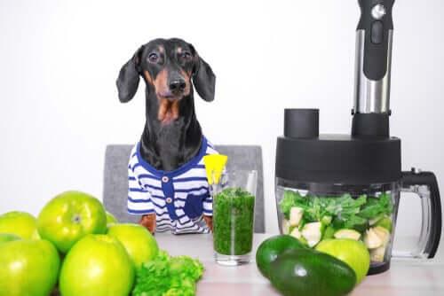Em caso de alergia alimentar: os cães podem se tornar veganos?