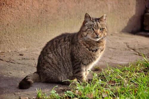 Tratamentos para a diarreia aguda em gatos