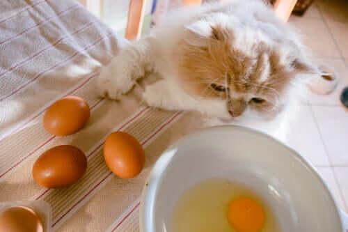 Os gatos podem comer ovos