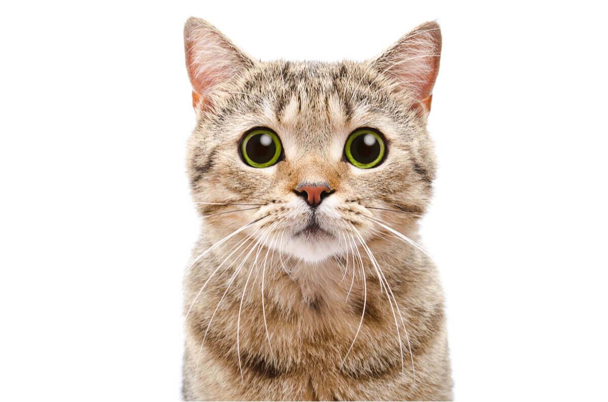 Interação social dos gatos