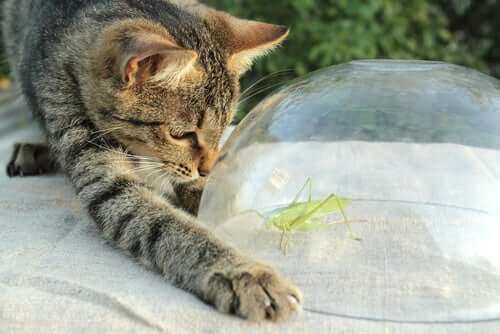 Ração com insetos para cães e gatos