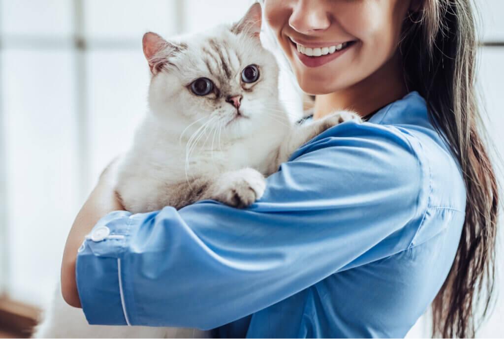 Acromegalia em gatos: sintomas e tratamentos