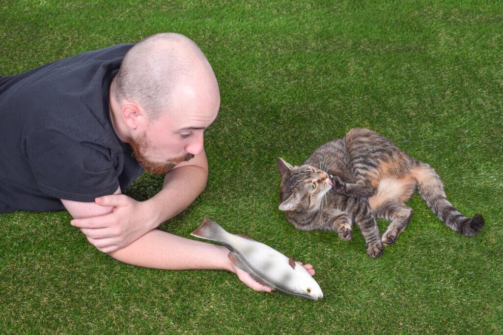A interação social dos gatos: quatro fatos para entendê-la