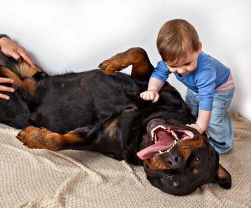 O rottweiler se comporta bem com as crianças?