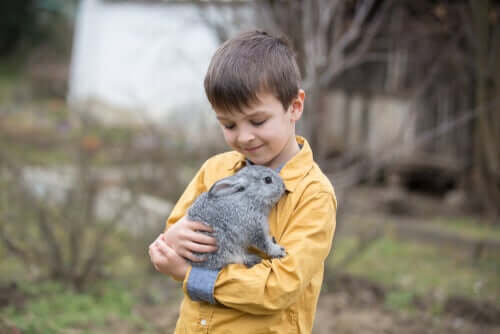 Papel da cecotrofia nos coelhos