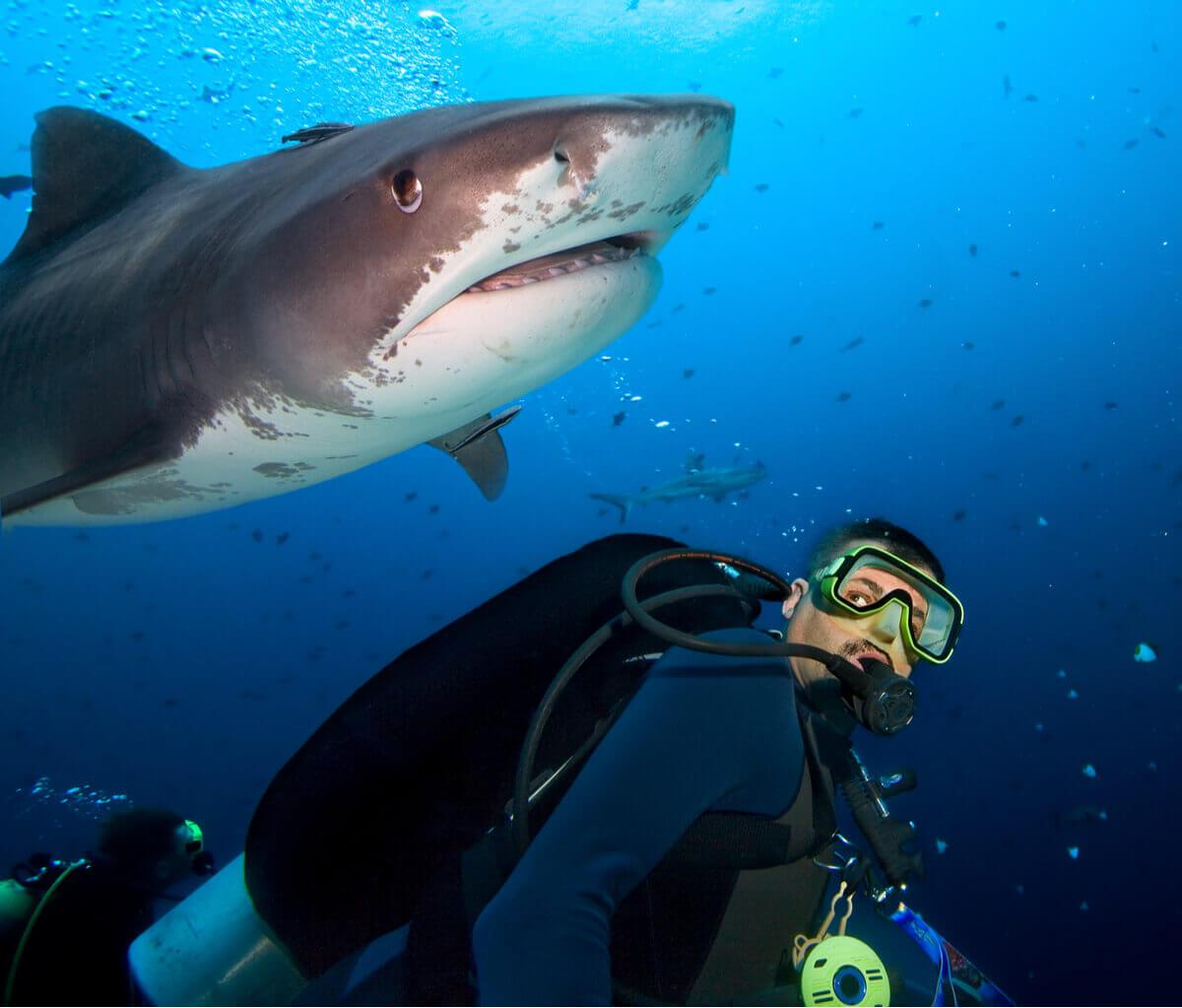 tubarões e arraias em perigo de extinção
