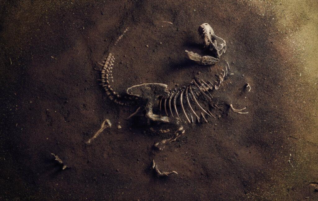 O que é a paleoecologia?