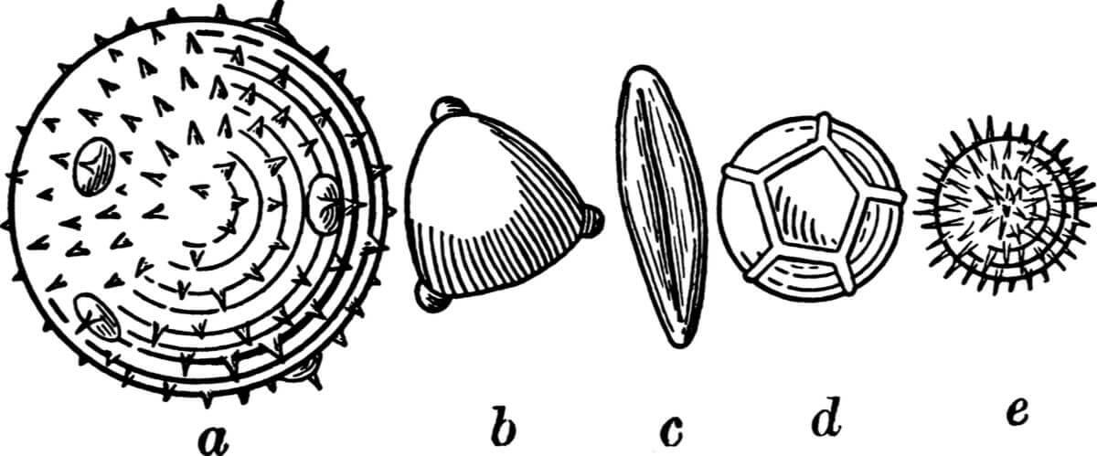 a paleoecologia