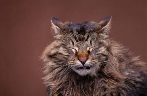 Sintomas e causas de resfriados em gatos