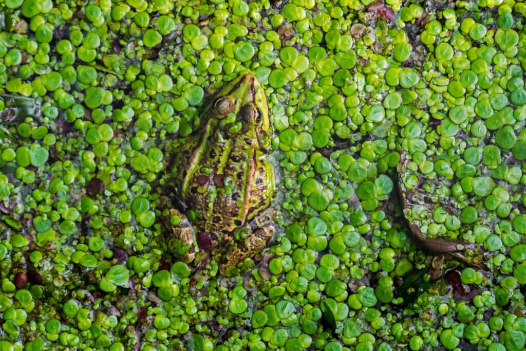 O desaparecimento das zonas úmidas: por que acontece e quais são as consequências