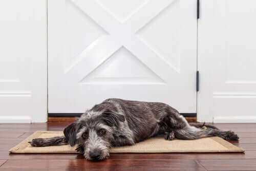 Como podemos ajudar nosso cachorro em casa?