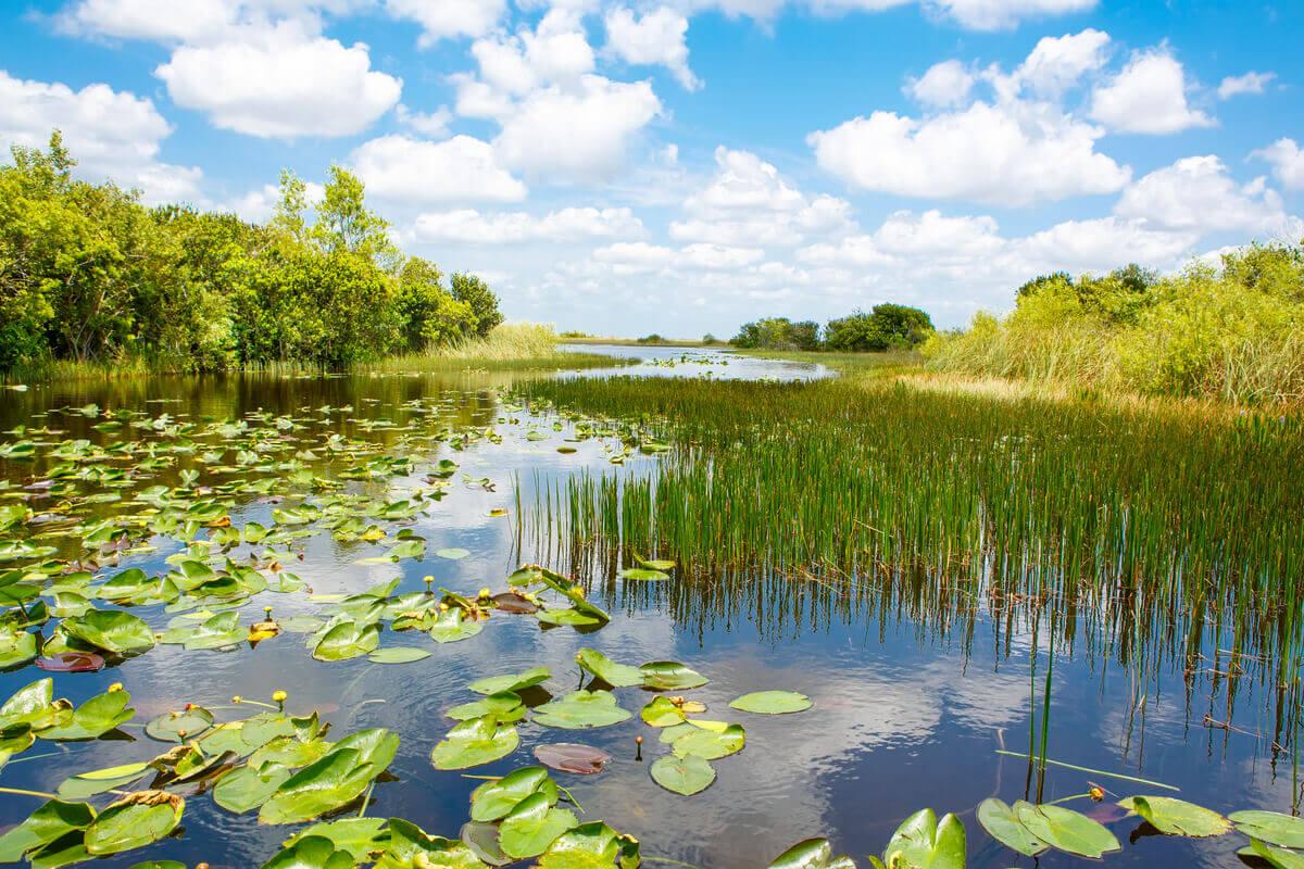 O desaparecimento das zonas úmidas