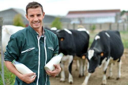 A lactação em animais de fazenda