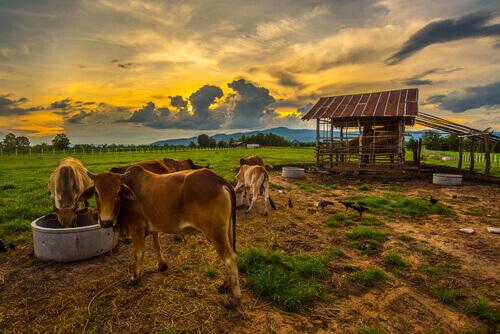 Animais que vivem no campo