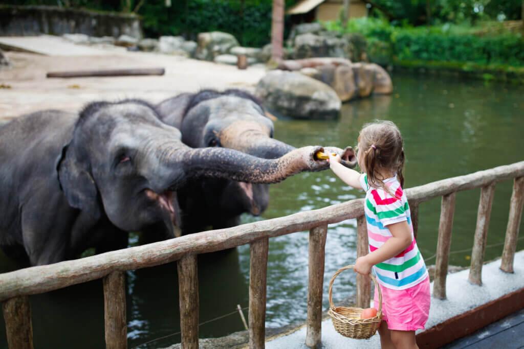Cuidados necessários para manter o bem-estar dos elefantes