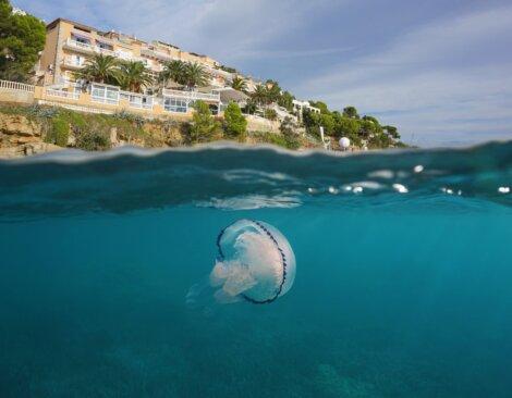 Uma água-viva na praia de um hotel.