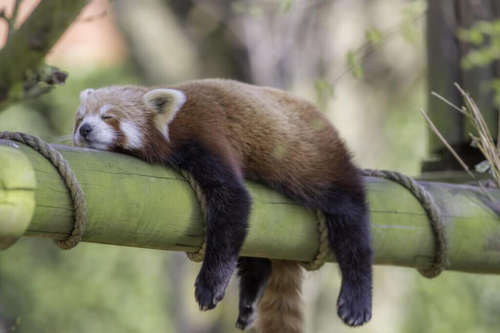 4 animais que dormem pouco