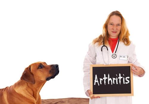 As coleiras de cobre são úteis para a artrite em cães?