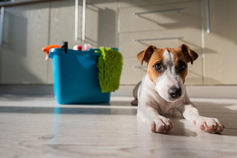 Produtos domésticos que podem ser prejudiciais para os pets