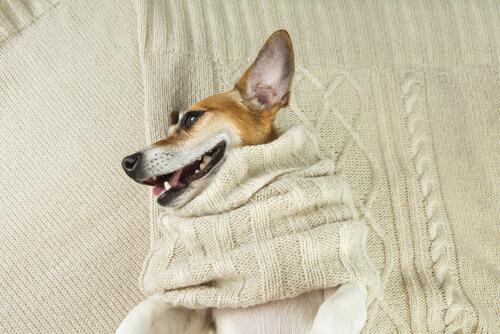 Como fazer uma cama para cães ou gatos com um casaco