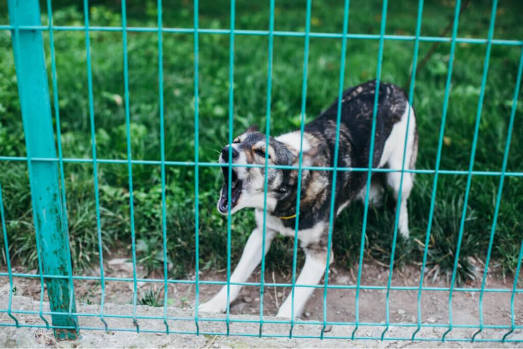 Cinco dicas para impedir um cachorro de latir muito