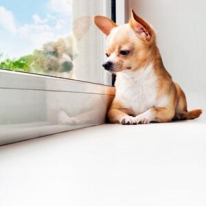 Cachorro sentado olhando pela janela.