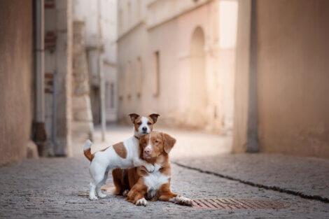 Um cão que não é agressivo com outros cães.
