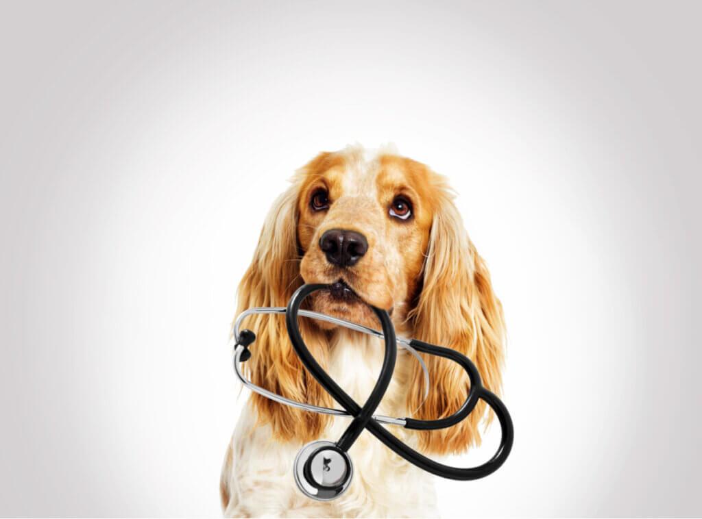 Insuficiência pancreática exócrina em animais de estimação
