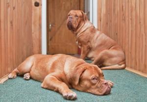 Cachorros ansiosos.