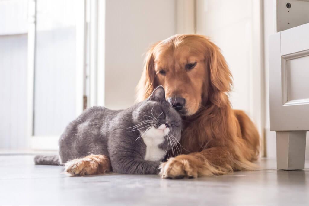Orientações para uma boa convivência entre cães e gatos