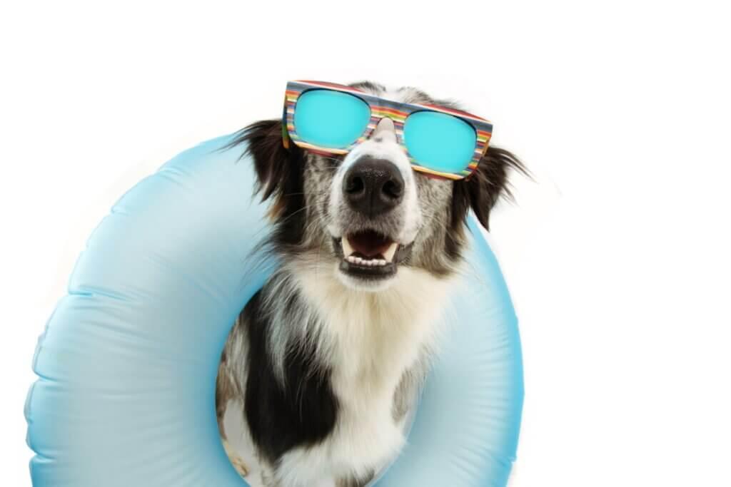 Síndrome pós-férias em cães: por que ocorre?