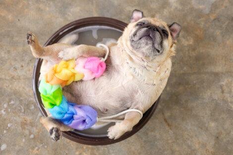 Um cachorro tomando banho.