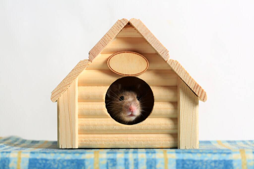 Casas para hamsters: tipos e recomendações