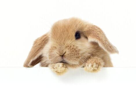 Um coelho em fundo branco.