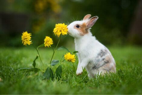 Existem muitos tipos de brinquedos para coelhos.
