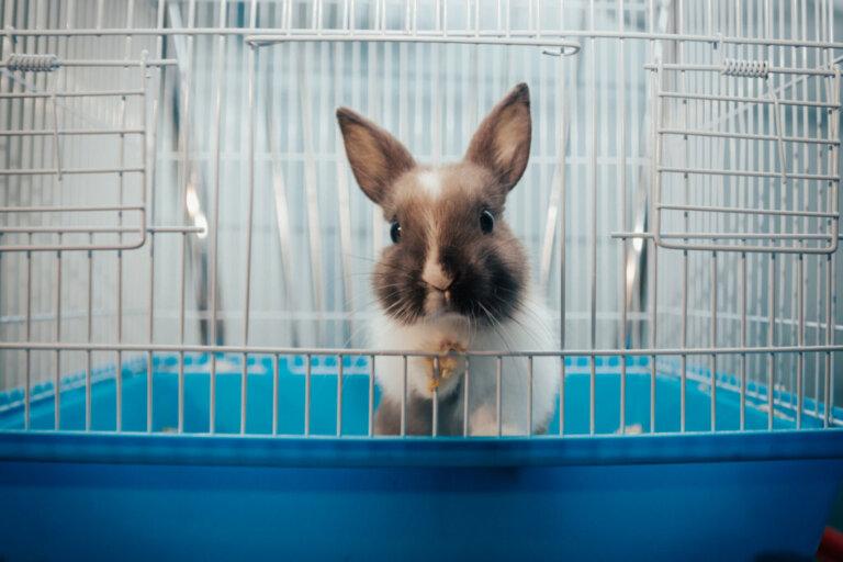 Brinquedos para coelhos: tudo o que você precisa saber