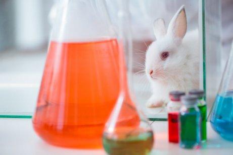 Experimentos com animais para cosméticos.