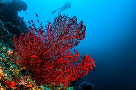 Existem novas espécies de peixes nos recifes de coral.