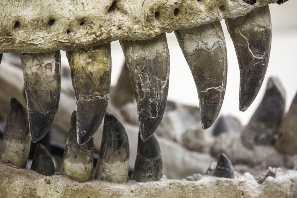 7 curiosidades do Atrociraptor