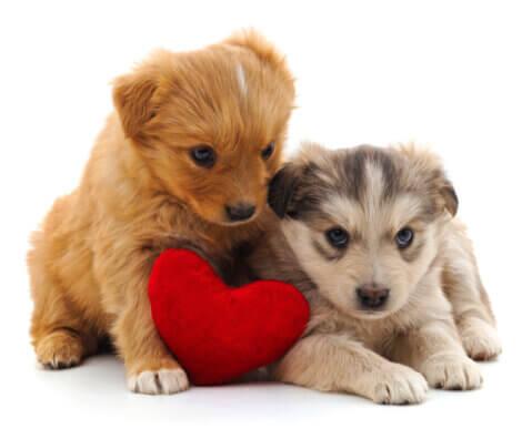 Um cão de presente para o Dia dos Namorados.