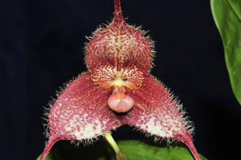 Outra das flores que parecem animais.