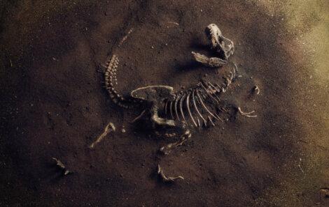 Exemplo de imagem de extinções em massa.