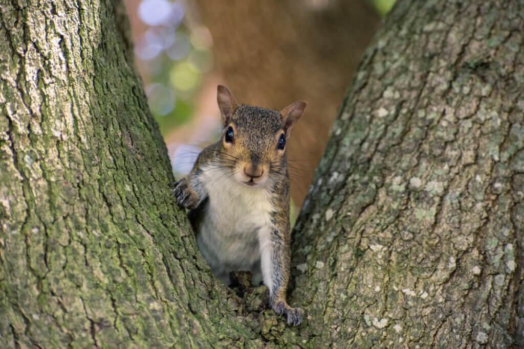 7 curiosidades sobre os esquilos