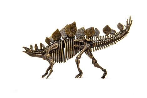 O esqueleto de um estegossauro.