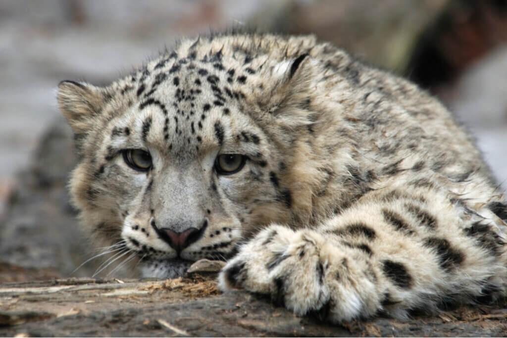 O que são as extinções em massa?