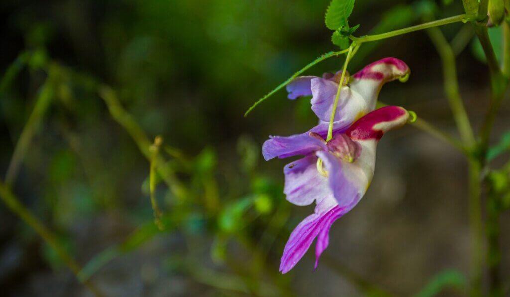 6 flores que parecem animais