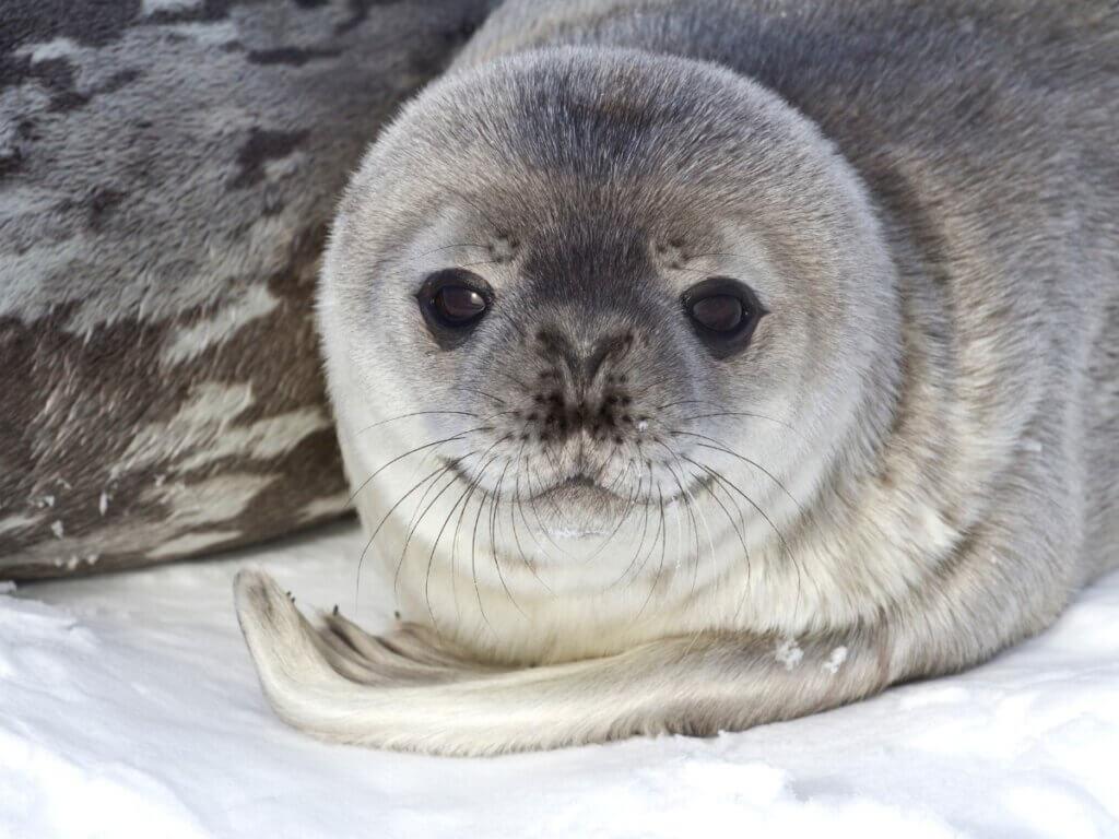 5 curiosidades de animais que habitam a Antártica