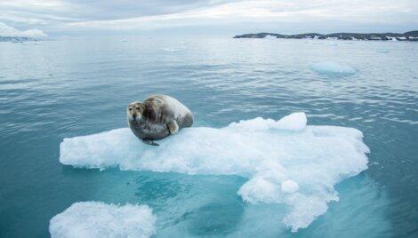 Um dos animais da Antártica no gelo.