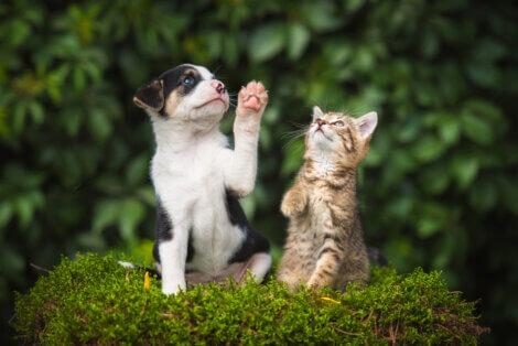 Filhotes: boa convivência entre cães e gatos