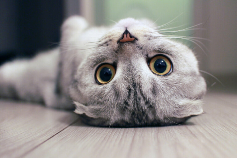 Por que meu gato se esconde quando recebo visitas?